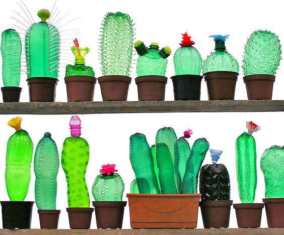 cactus bottiglie