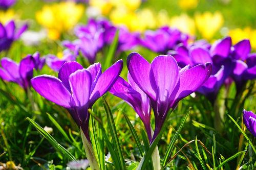 depurarsi in primavera