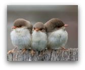 uccellini in città