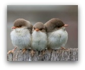 uccellini in citt�