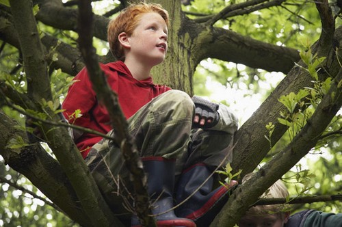 tree climbing per bambini